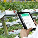 """""""Coltiva dati, raccogli valore"""": i big data al servizio di agricoltura 4.0"""